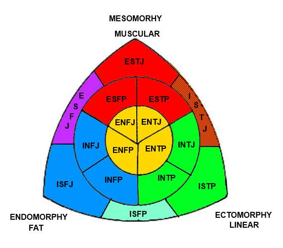 Weight loss options for morbidly obese image 1